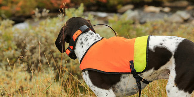 How Does A Pet GPS Tracker Work