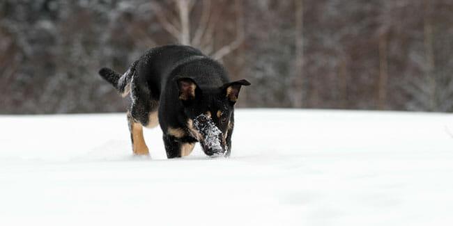 How Far Can A Pet GPS Tracker Work