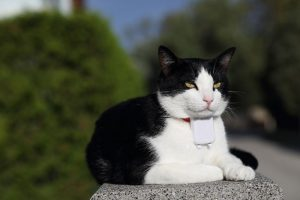 Prices Of GPS Pet Trackers
