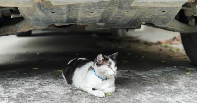 The cat dodges the sun beneath the car