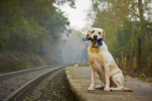 Types Of Pet GPS Trackers