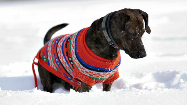 dog in the snow with tracker