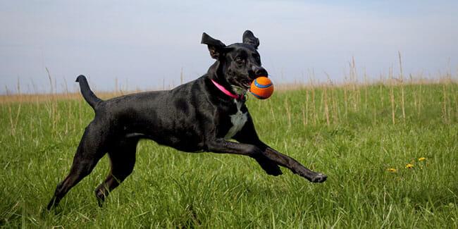 Do Pet Trackers Monitor Pet Activity