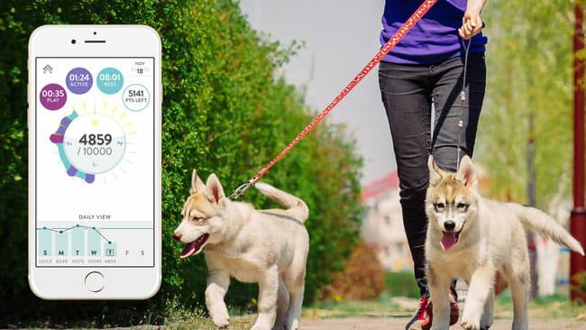 FitBark Dog Walker