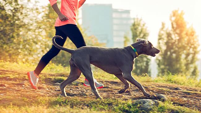 dog and girl jogging
