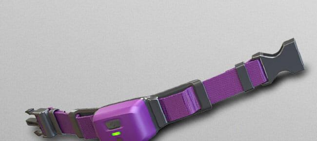 PetPace collar design