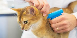 Microchip implant for cat