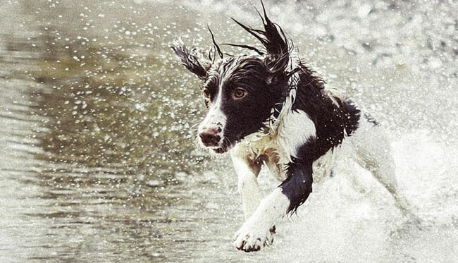 Invoxia Pet Tracker Waterproof