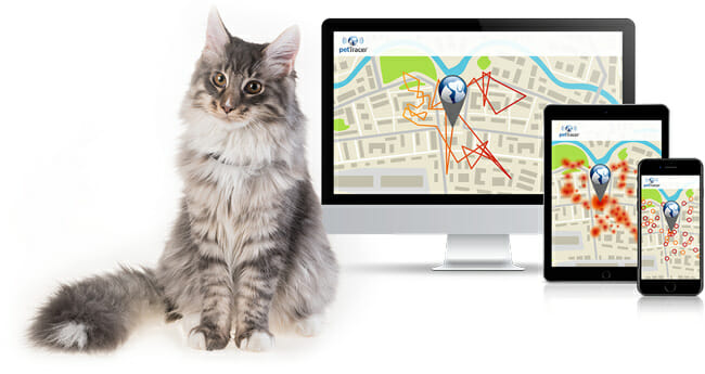PetTracer cat and map tracker on smart device