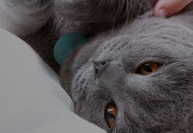 TabCat on silver cat