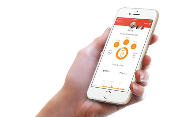 PitPat app on smart phone
